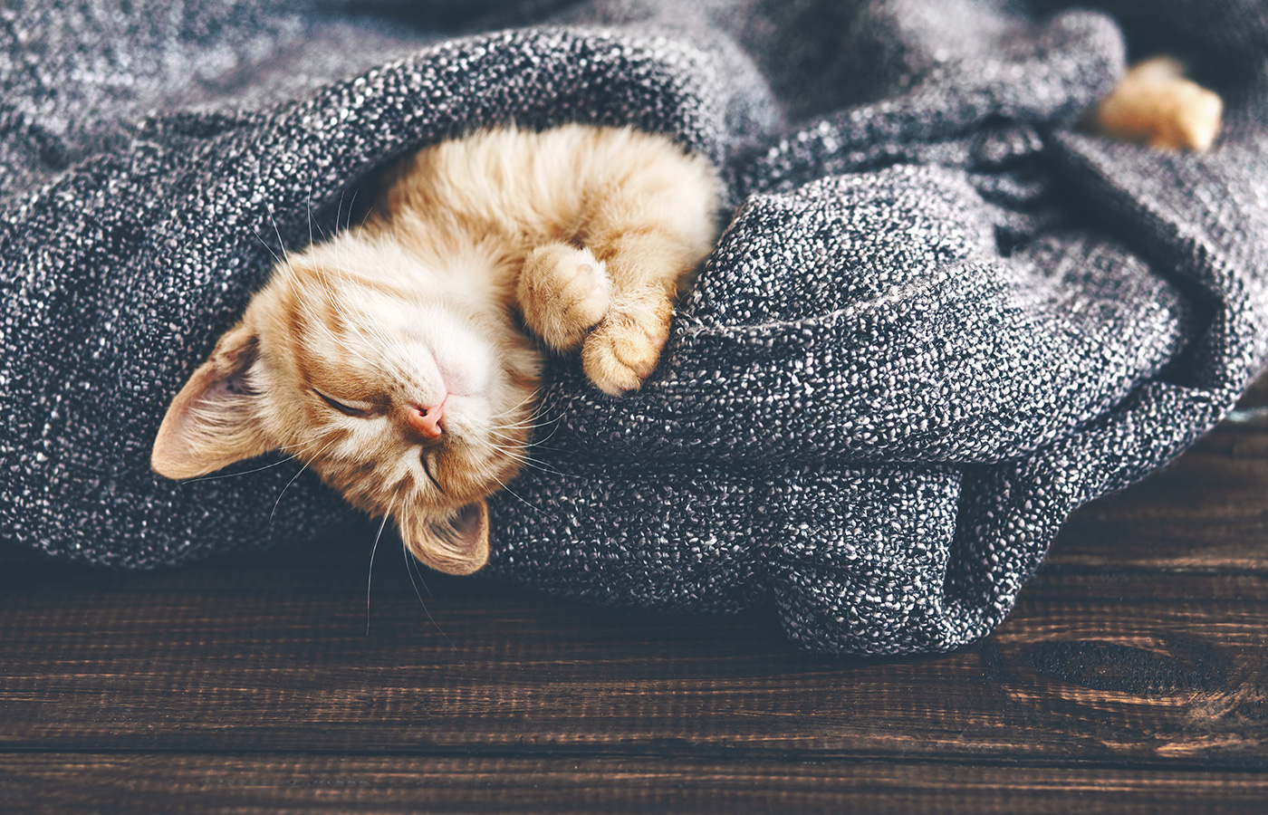 Cute little ginger kitten is sleeping in soft blanket on wooden floor - Image